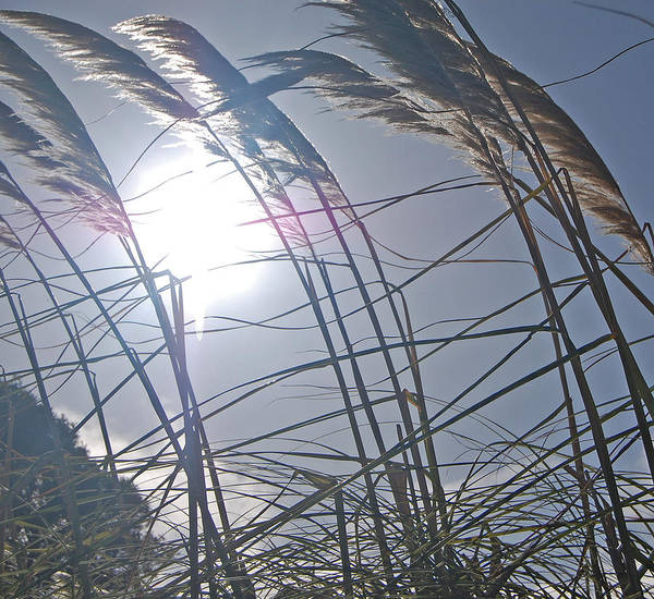 Grass Art Print featuring the photograph In The Wind by Jean Booth