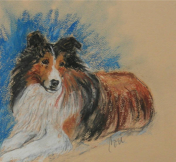 Sheltie Art Print featuring the drawing Loyal Companion by Cori Solomon