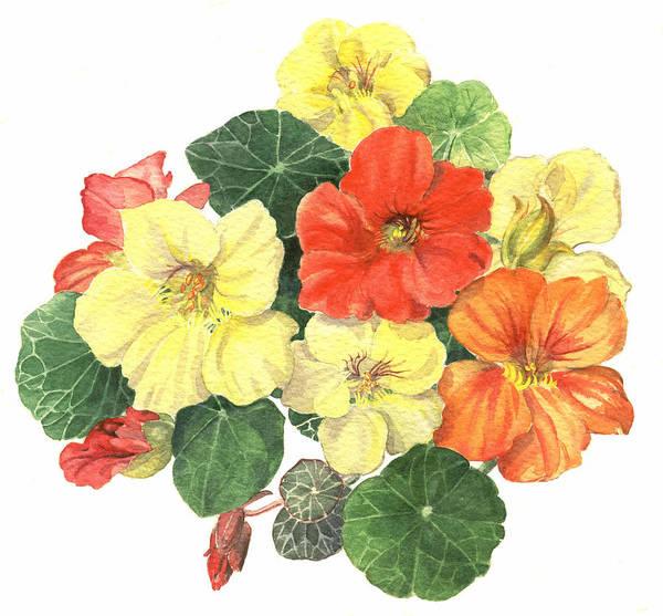 Flower Art Print featuring the painting Nasturtiums by Maureen Carter