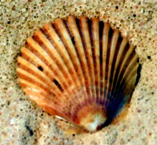 Sea Shell Art Print featuring the photograph Singled Out by Natalie Bollinger