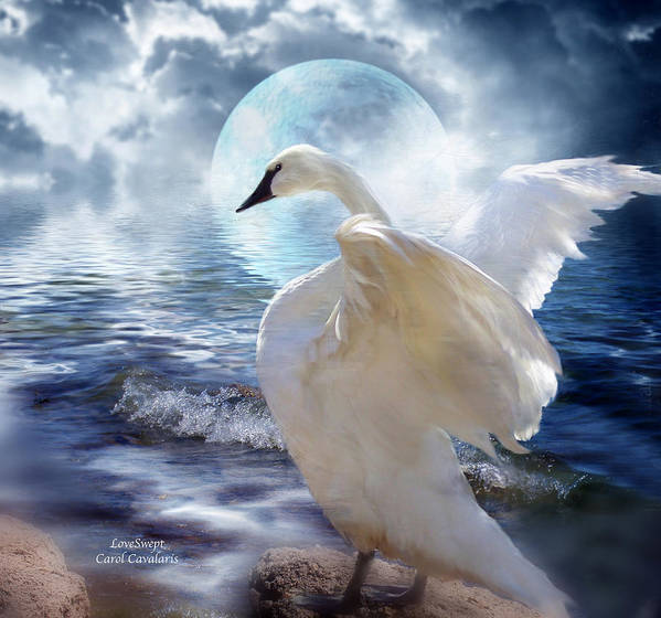 Swan Print featuring the mixed media Love Swept by Carol Cavalaris