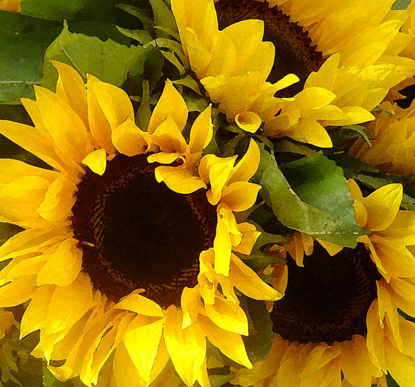 Sunflowers Art Print featuring the painting Sunflowers by Amy Vangsgard