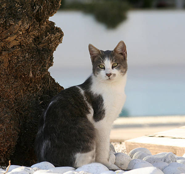 Cat Art Print featuring the photograph Beach Cat by Gaile Griffin Peers