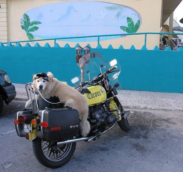 Motercycle Art Print featuring the photograph Dogs Rule by Jim Derks
