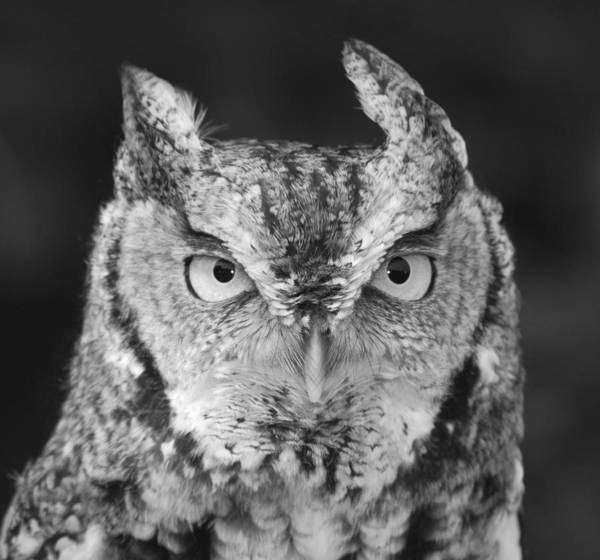 Black And White Art Print featuring the photograph Intense Stare by Richard Bryce and Family