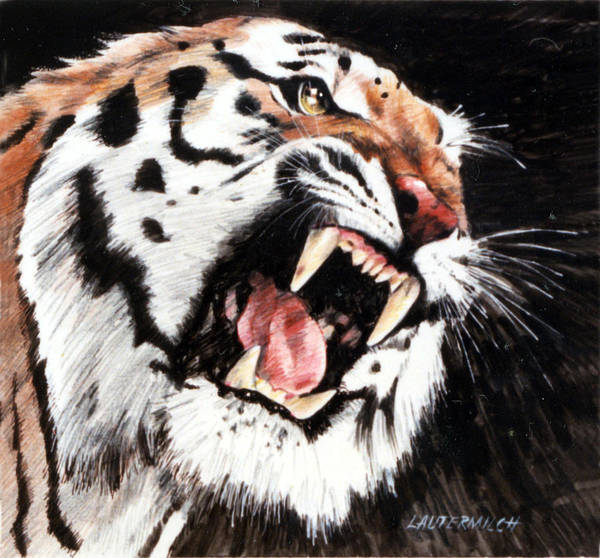 Tiger Roaring Art Print featuring the painting Tiger by John Lautermilch