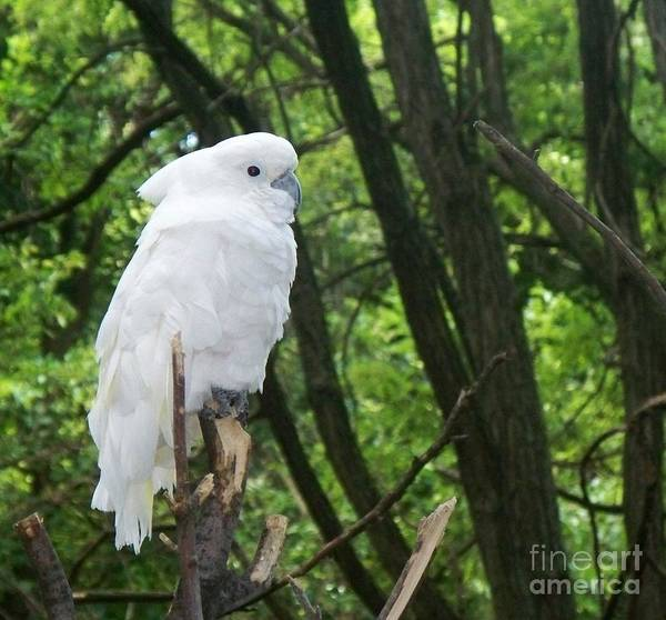 Bird Art Print featuring the photograph White Parrot by Emily Kelley