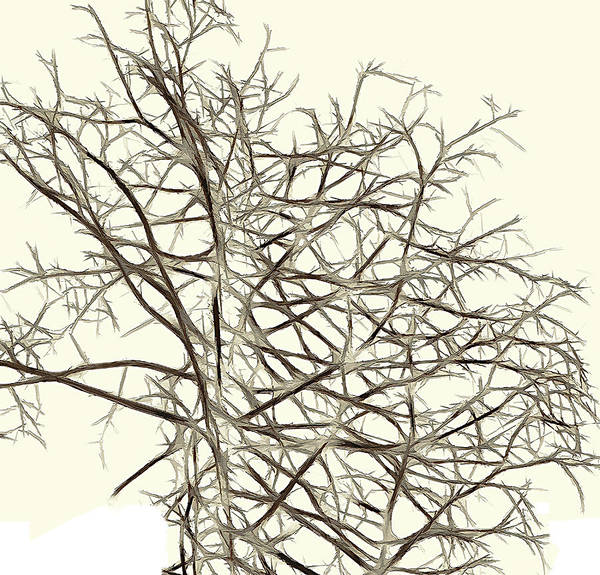 Abstract Art Print featuring the photograph Fractal Ghost Tree - Inverted by Steve Ohlsen