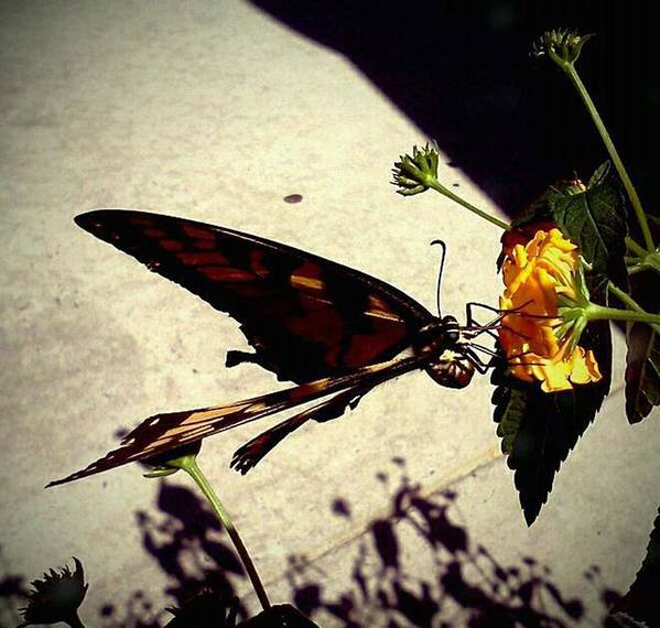 Butterfly Art Print featuring the photograph Prey The Yellow Flower by Aaron Simmons