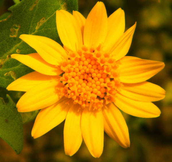 Yellow Art Print featuring the photograph Up Close by Les Pheil