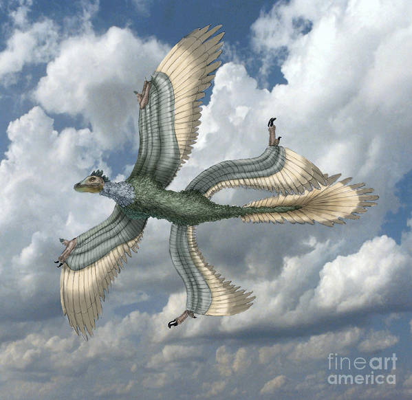 Illustration Art Print featuring the photograph Microraptor by Spencer Sutton
