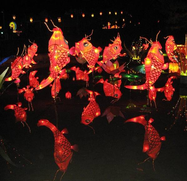 Chinese Art Print featuring the photograph Dancing Goldfish Pond At Night by Sheri Gundry