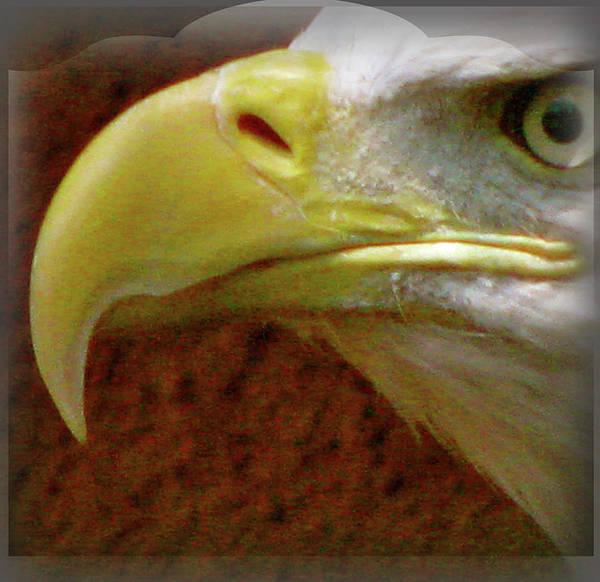 Eagle Beak Power Art Print featuring the photograph Eagle Beak Power by Debra   Vatalaro