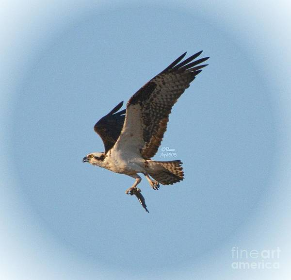 Osprey Art Print featuring the photograph Osprey Natures Way Lv by Rennae Christman