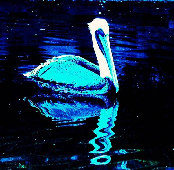 Pelican Art Print featuring the photograph Pelican by Daniele Smith