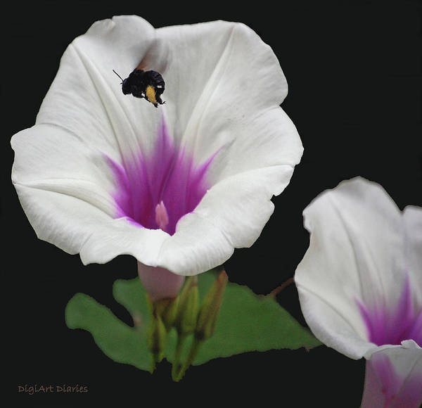 Bumble Bee Art Print featuring the digital art Pollen Overload by DigiArt Diaries by Vicky B Fuller