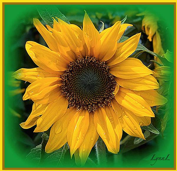 Sunflower Art Print featuring the photograph Sunshine by S Lynn Lehman