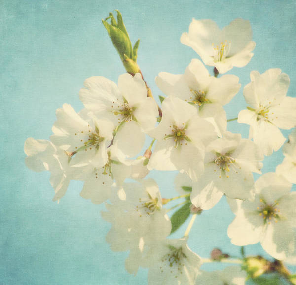Flower Art Print featuring the photograph Vintage Spring Blossoms by Kim Hojnacki