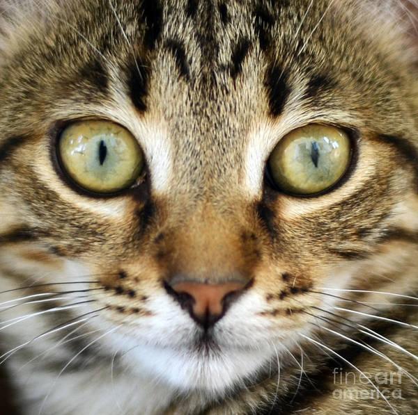 Cat Art Print featuring the photograph Cat Portrait Macro Shot by Aleksandar Mijatovic