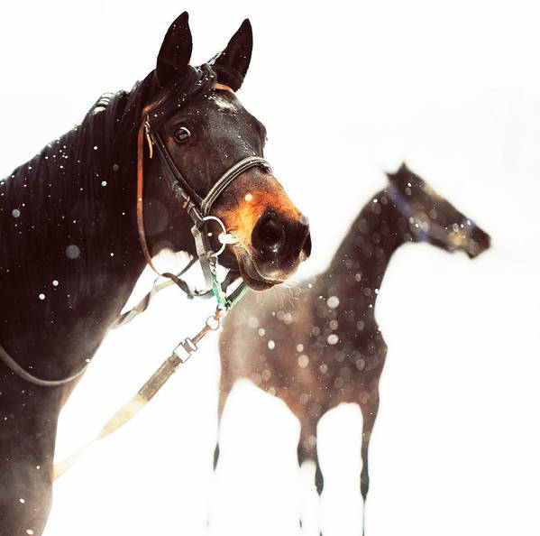 Horse Print featuring the photograph Everyone Has A Dream by Jenny Rainbow