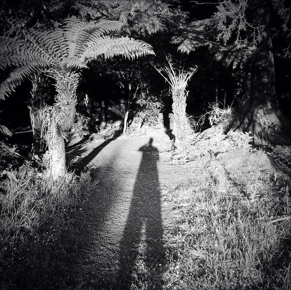 Silhouette Print featuring the photograph Forest Shadow by Les Cunliffe