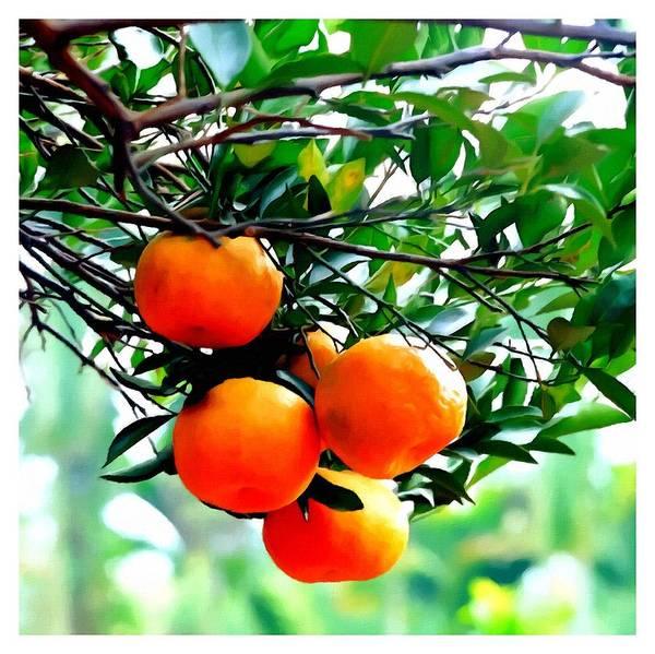 Fresh Orange On Plant Art Print featuring the painting Fresh Orange On Plant by Jeelan Clark