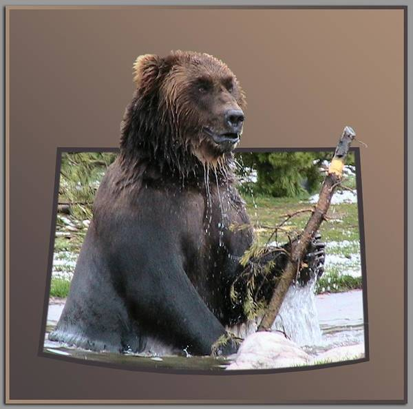 Animals Art Print featuring the photograph Grizzly Bear 6 Out Of Bounds by Thomas Woolworth