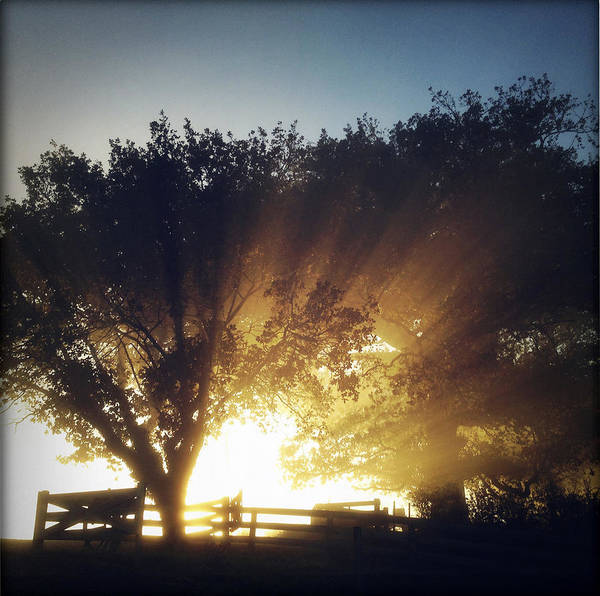 Forest Art Print featuring the photograph Sun Rays by Les Cunliffe