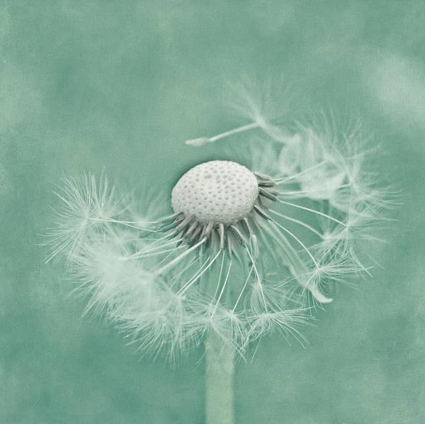 Nature Art Print featuring the photograph Wishful by Kim Hojnacki