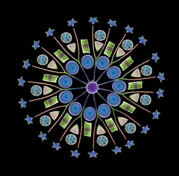 Diatom Art Print featuring the photograph Diatom Assortment, Sems by Steve Gschmeissner