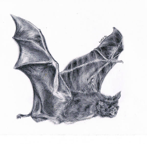 Bat Art Print featuring the drawing Bat by Lucy D