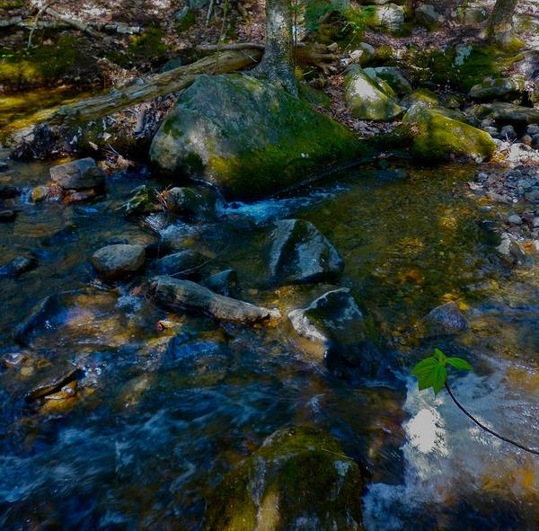 Landscape Art Print featuring the photograph Childs Brook Wz19 by George Ramos