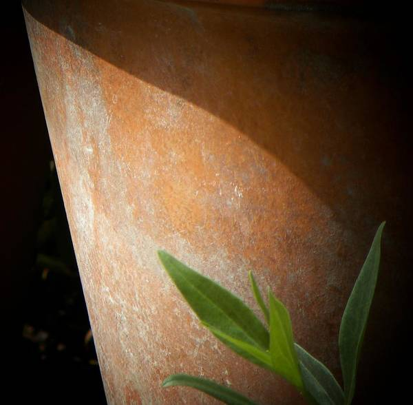 Terracotta Pot Art Print featuring the photograph Teracotta by Michael Snyder