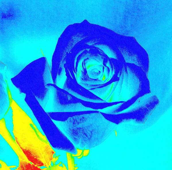 Floral Art Print featuring the photograph Single Blue Rose Abstract by Karen J Shine