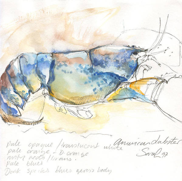 Lobster Art Print featuring the painting American Blue Lobster by Sarah Madsen