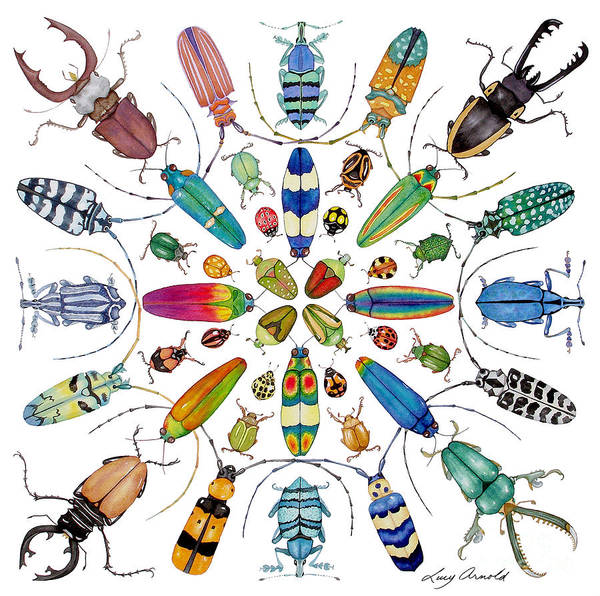 Insects Art Print featuring the painting Beautiful Beetles by Lucy Arnold
