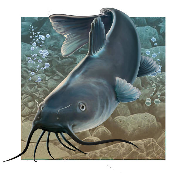 Fish Art Print featuring the digital art Catfish by Valer Ian