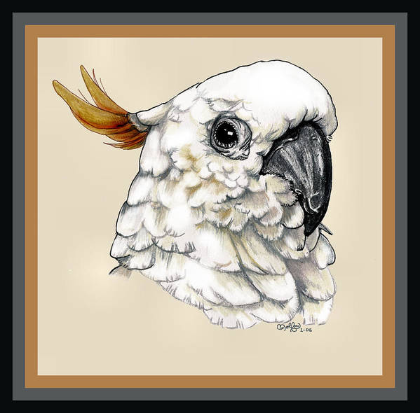 Cockatoo Art Print featuring the drawing Cockatoo by Crystal Rolfe