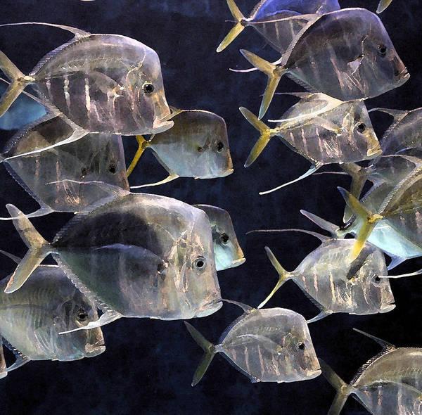 Fish Art Print featuring the photograph Fishy by Richard Gerken