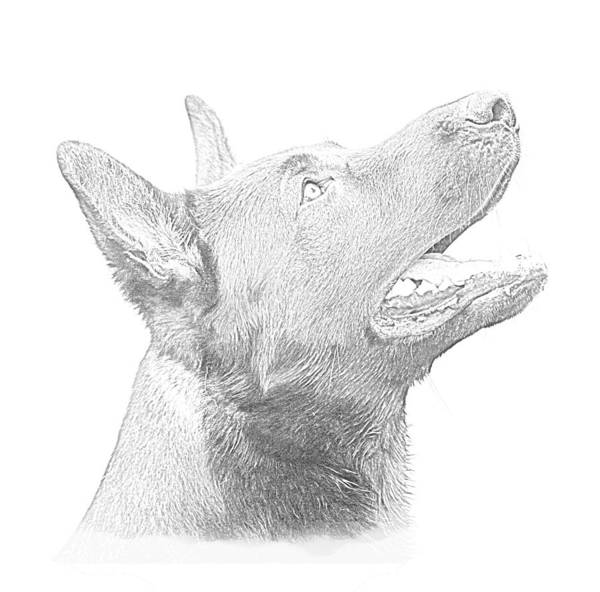 Dog Art Print featuring the drawing German Shepherd Profile by Christean Ramage