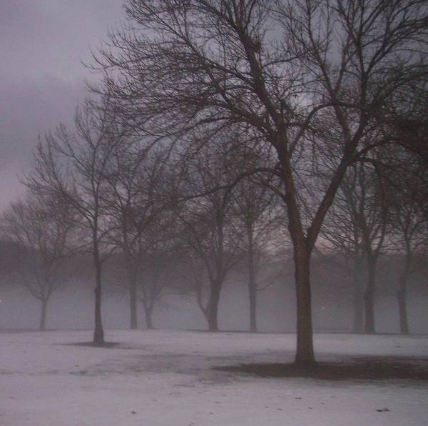 January Art Print featuring the photograph January Fog 4 by Anita Burgermeister
