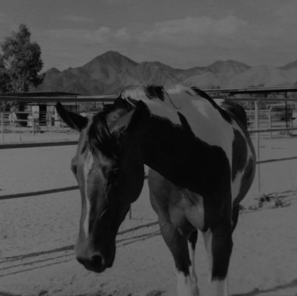 Black And White Art Print featuring the photograph Mr Ed In Black And White by Rob Hans