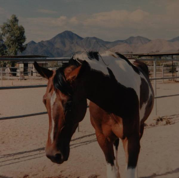 Horse Art Print featuring the photograph Mr Ed by Rob Hans