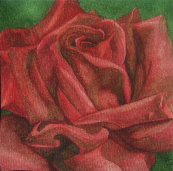 Rose Art Print featuring the painting Red Rose by Emily Young