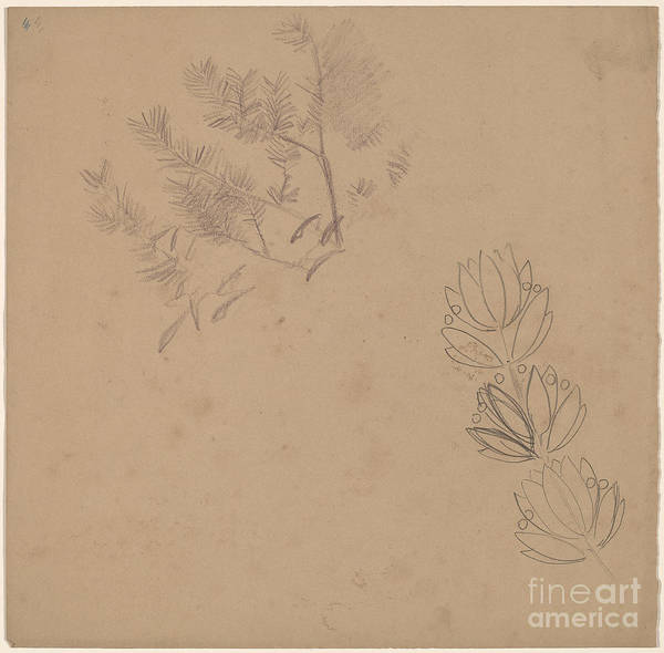 Art Print featuring the drawing Study For A Border Design With A Sketch Of A Tree by Charles Sprague Pearce