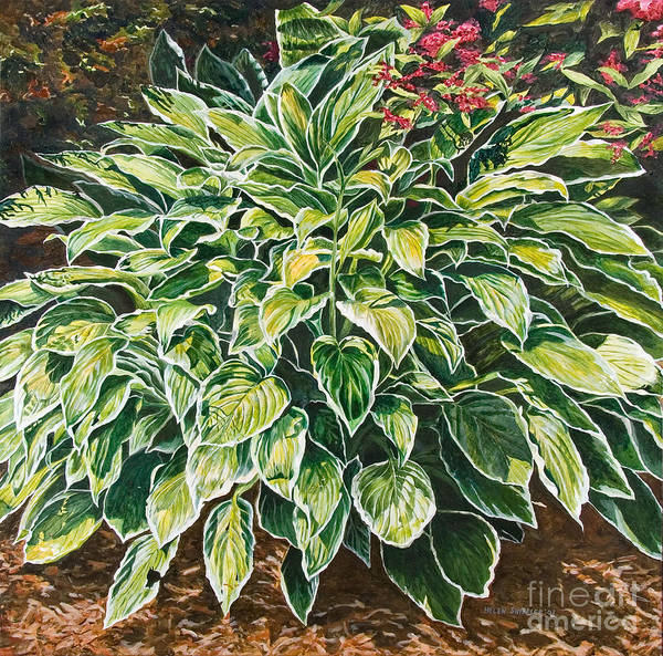 Hosta Art Print featuring the painting Sunshine Shadows by Helen Shideler