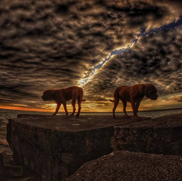 Dog Art Print featuring the photograph Two Dog Sunset by Lliem Seven
