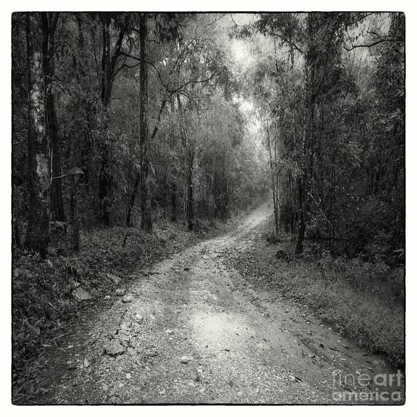 Adventure Art Print featuring the photograph Road Way In Deep Forest by Setsiri Silapasuwanchai