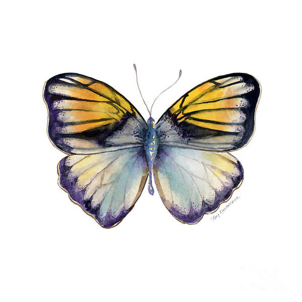 Pieridae Butterfly Art Print featuring the painting 14 Pieridae Butterfly by Amy Kirkpatrick