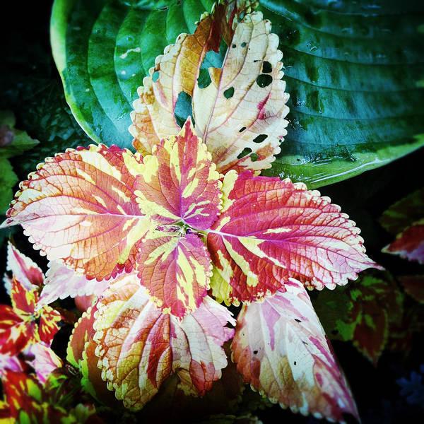 Plant Art Print featuring the photograph Phoenician Fauna by Natasha Marco